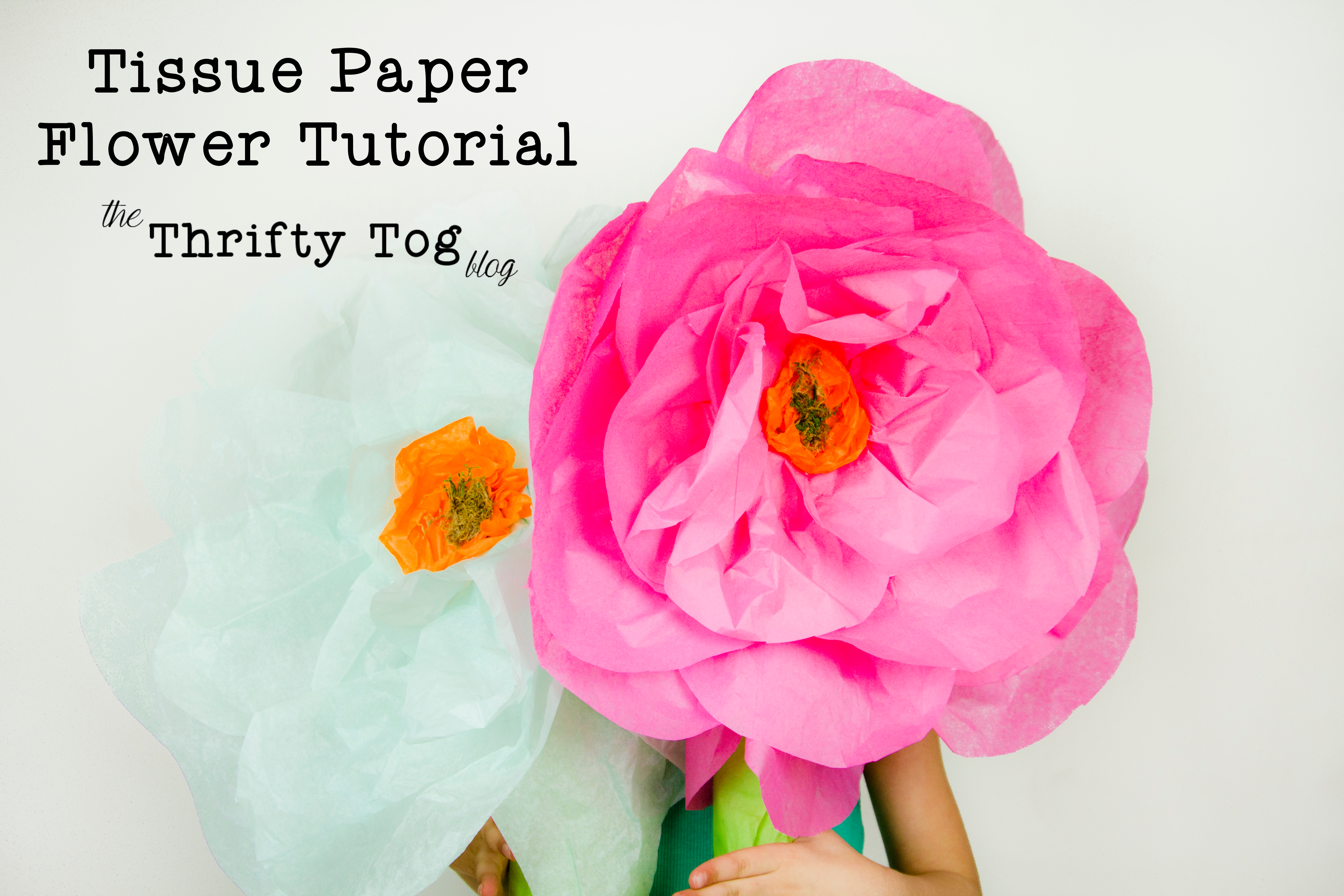 Tissue Paper Flower Tutorial Snaps Sprouts Photography The